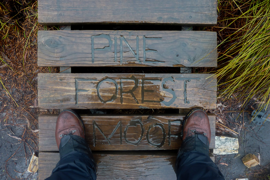 boardwalk-pine-forest-moor-overland-track