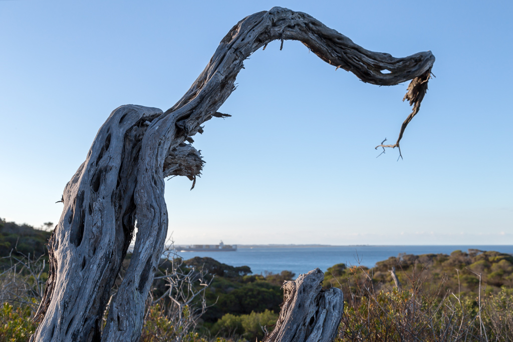 gnarled-tree-point-nepean