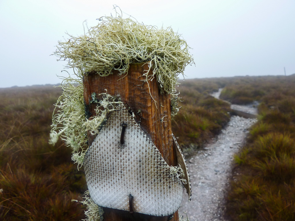 moss-on-track-marker-overland-track