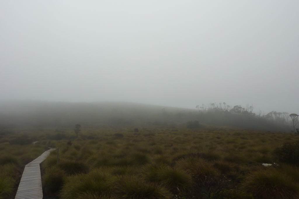 pine-forest-moor-rain-mist-overland-track
