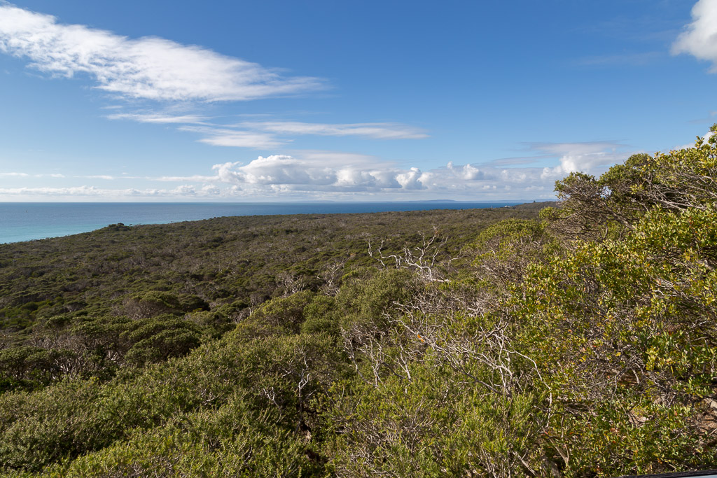point-nepean-bushland-from-cheviot-hill