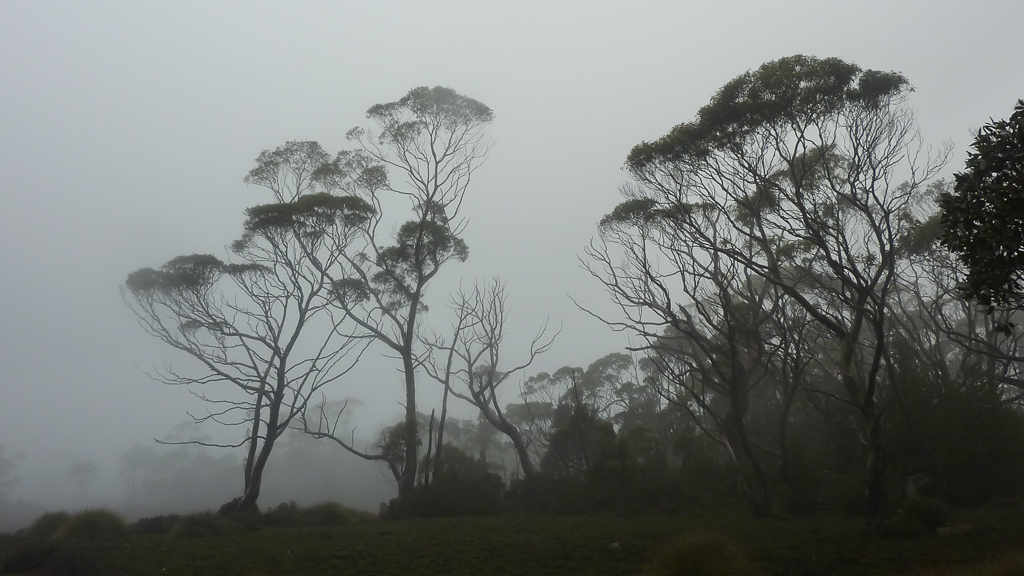 rain-mist-near-windermere-hut-overland-track