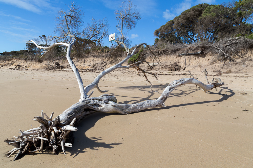 tree-branch-on-beach-point-nepean