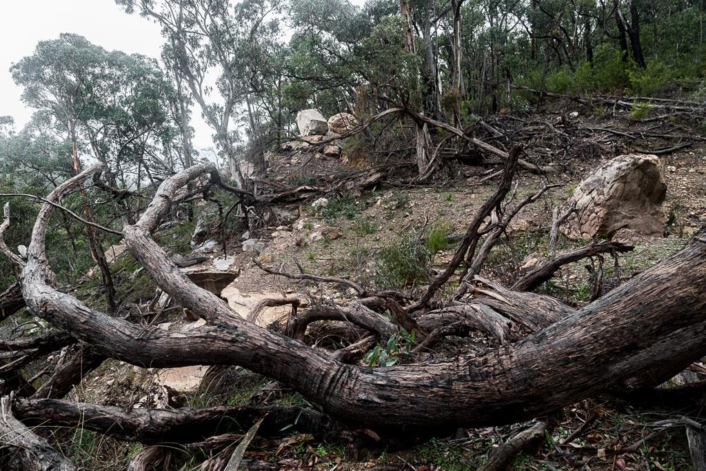 fallen-trees-burma-track