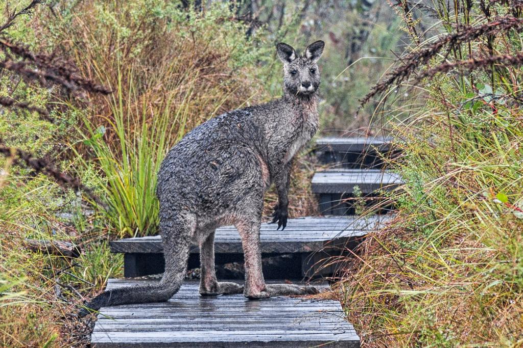 kangaroo-sundial-peak