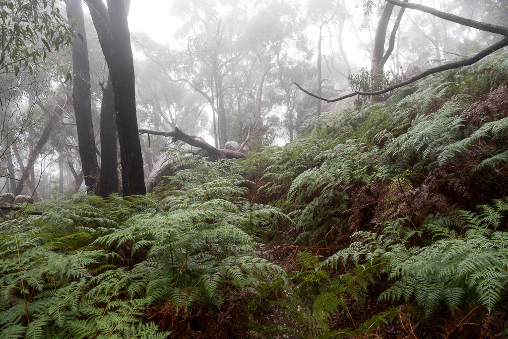mist-and-ferms-grampians