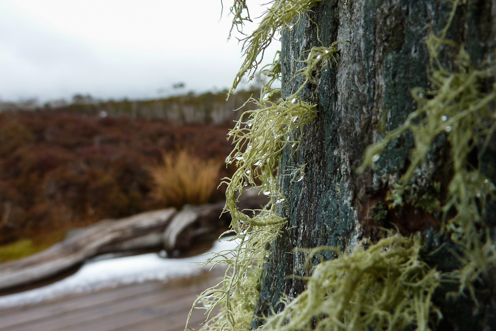 moss-on-track-marker-overland-track-tasmania