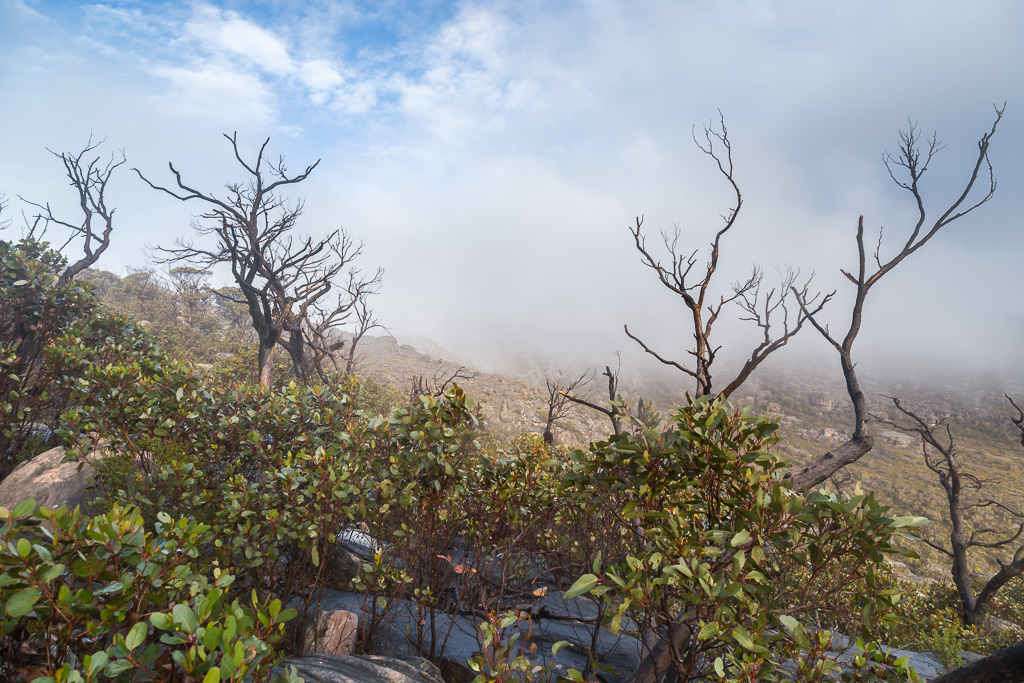 trees-low-cloud-mount-rosea-track