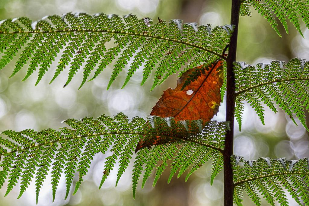 brown-leaf-on-fern-frond