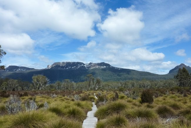button-grass-plain-overland-track