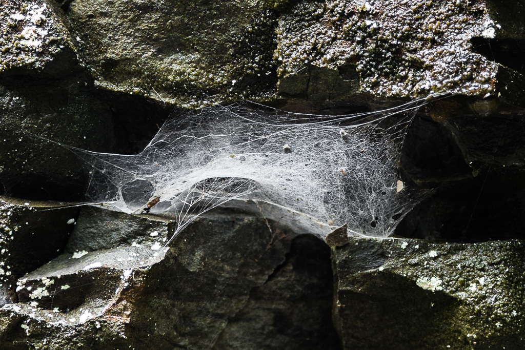 cobwebs-on-rock-canyon