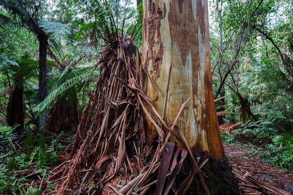 eucalypt-bark-on-ground