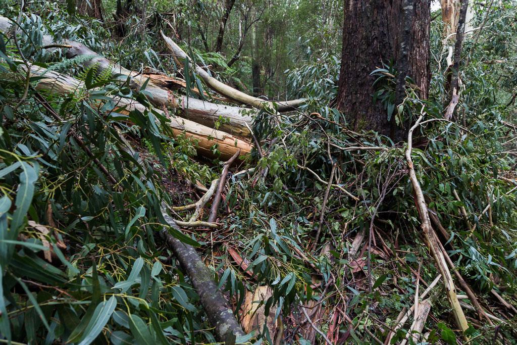 fallen-tree-on-walking-track