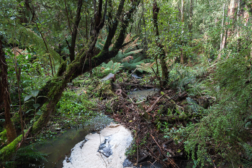 fern-gully-near-henderson-falls