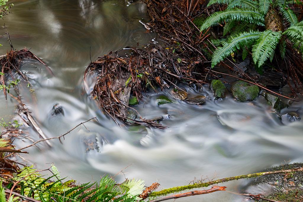 leaves-in-water-henderson-creek