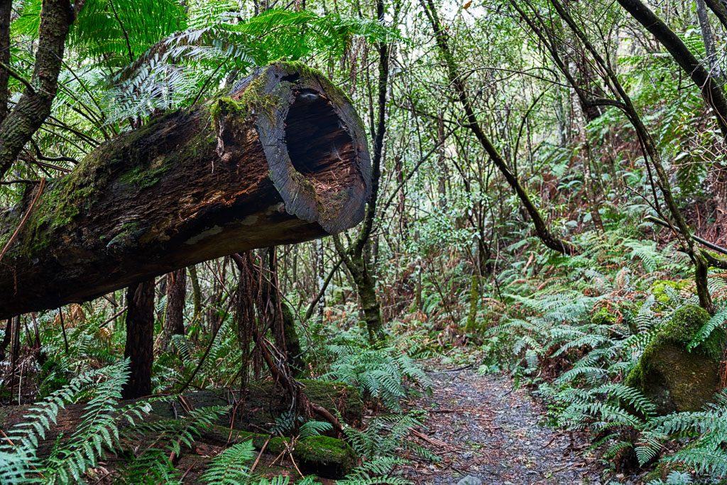 track-through-fern-gully