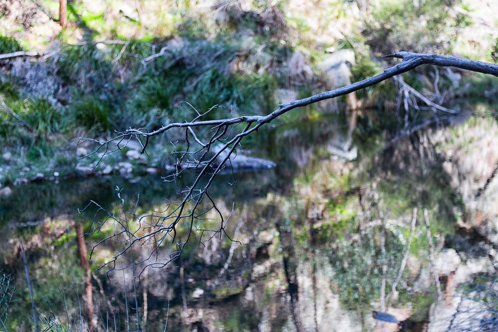 tree-branch-near-lerderderg-river