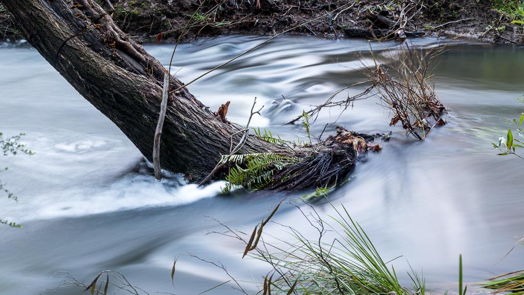 tree-stump-saint-george-river