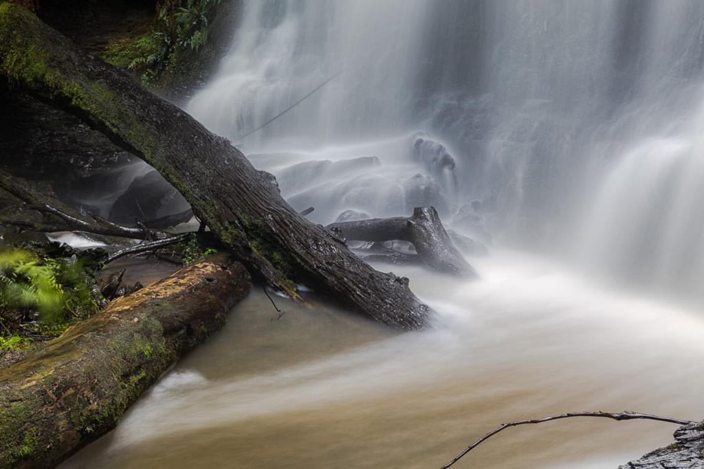 trees-under-henderson-falls