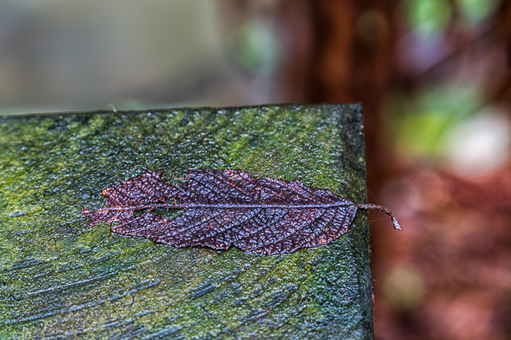 wet-leaf-on-timber-post