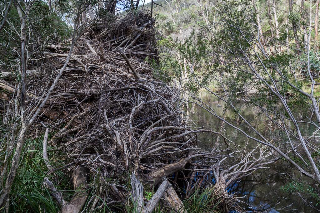 debris-flood-lerderderg-river