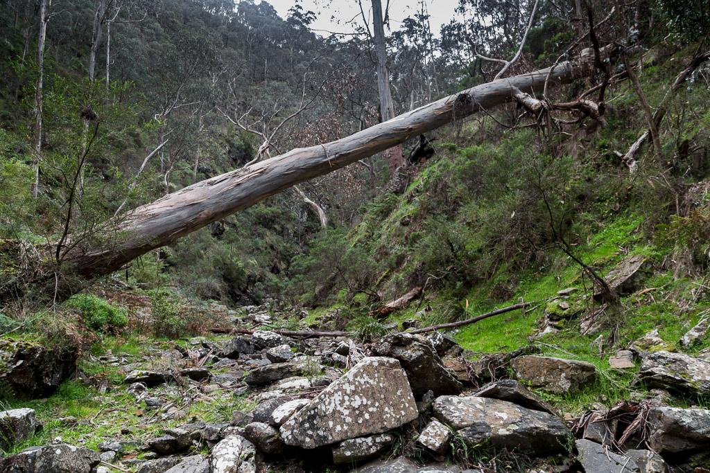 fallen-tree-old-river