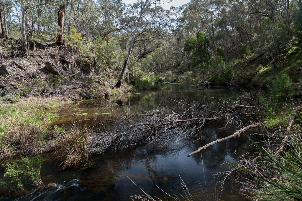 fallen-trees-in-lerderderg-river