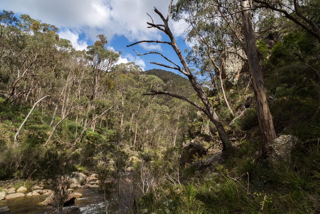 trees-lerderderg-river