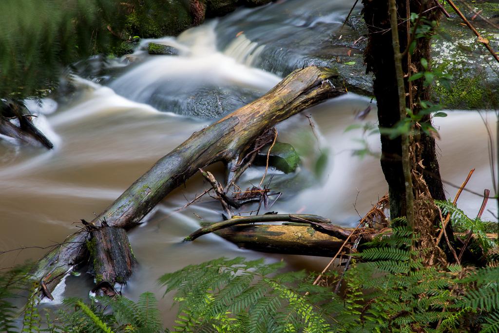 fallen-trees-in-sheoak-creek