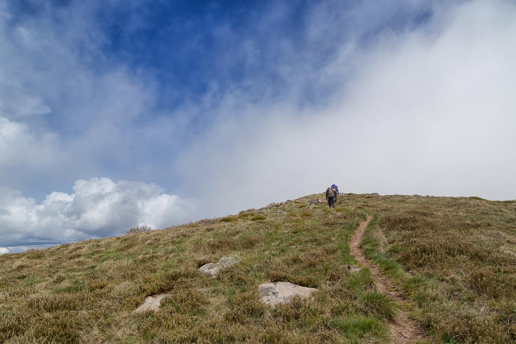 crosscut-saw-alpine-national-park