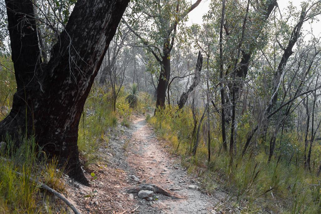currawong-falls-track