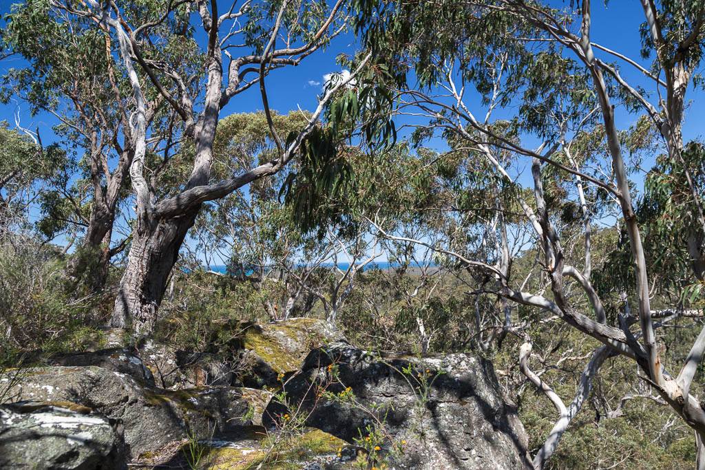 rock-outcrop-currawong-falls-track