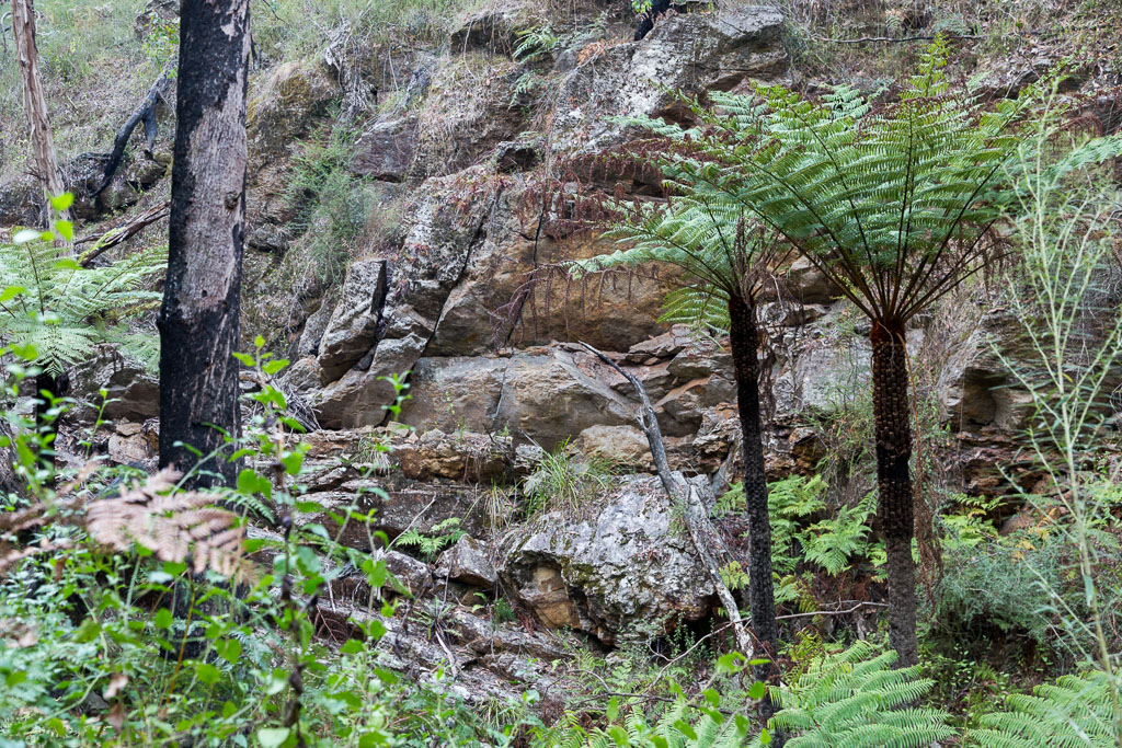 rock-wall-ferns-currawong-falls-track