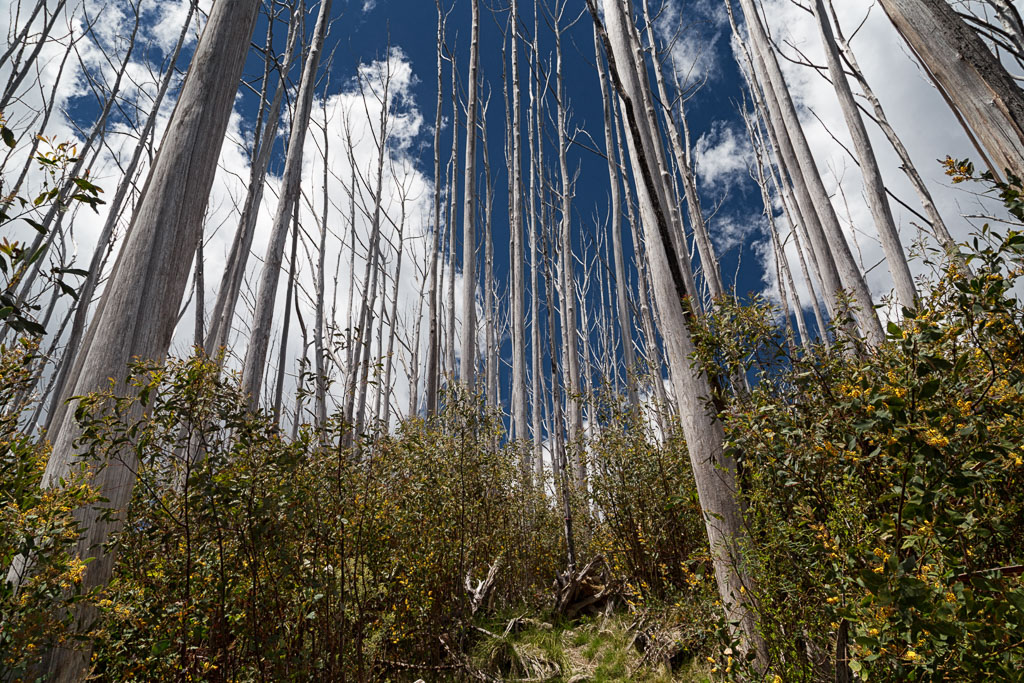 bushfire-regrowth-aawt