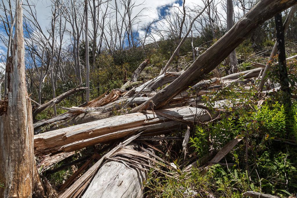 fallen-trees-on-aawt