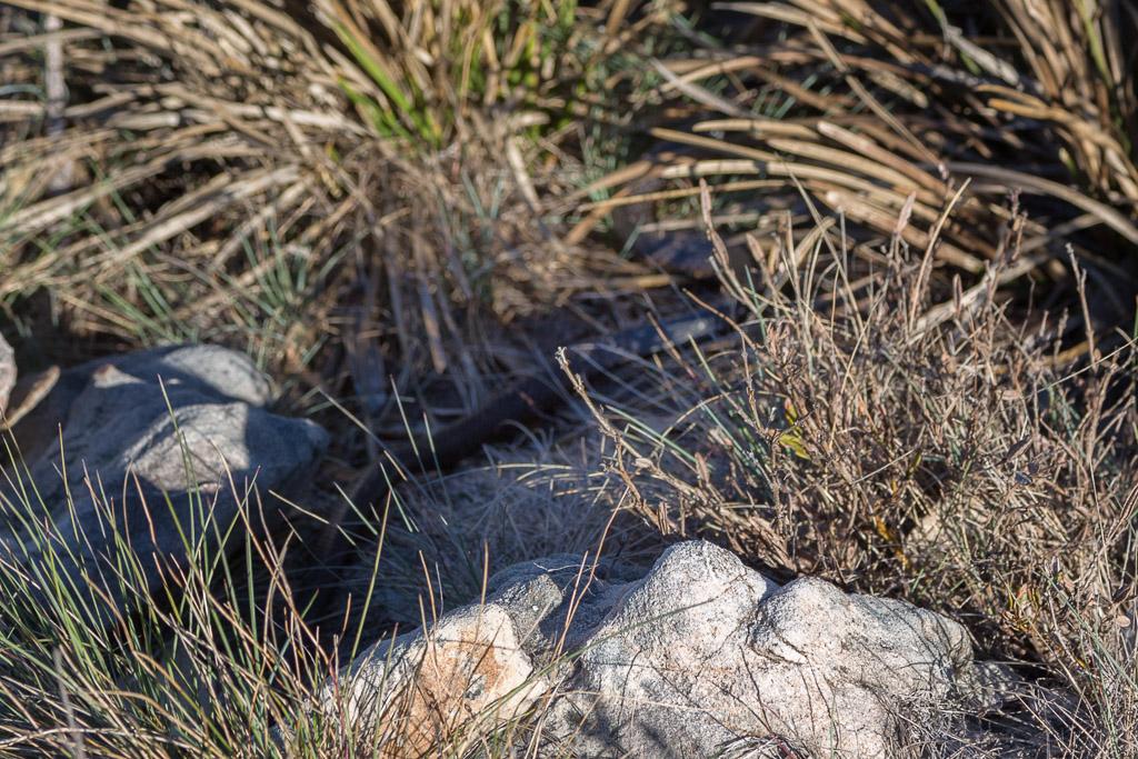 snake-in-grass
