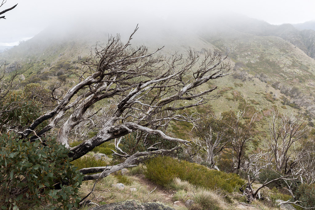 snow-gums-mist-crosscut-saw