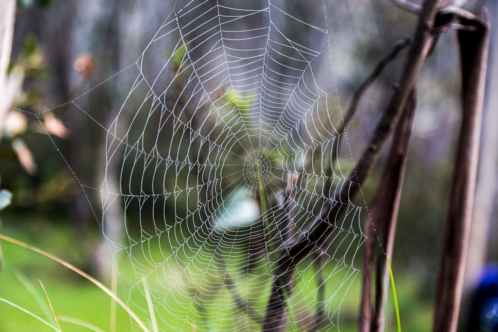 spider-web-dew