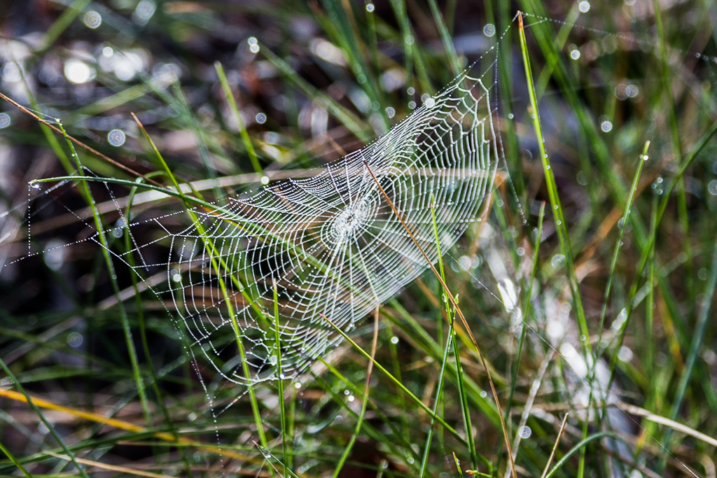 spider-web-morning-dew