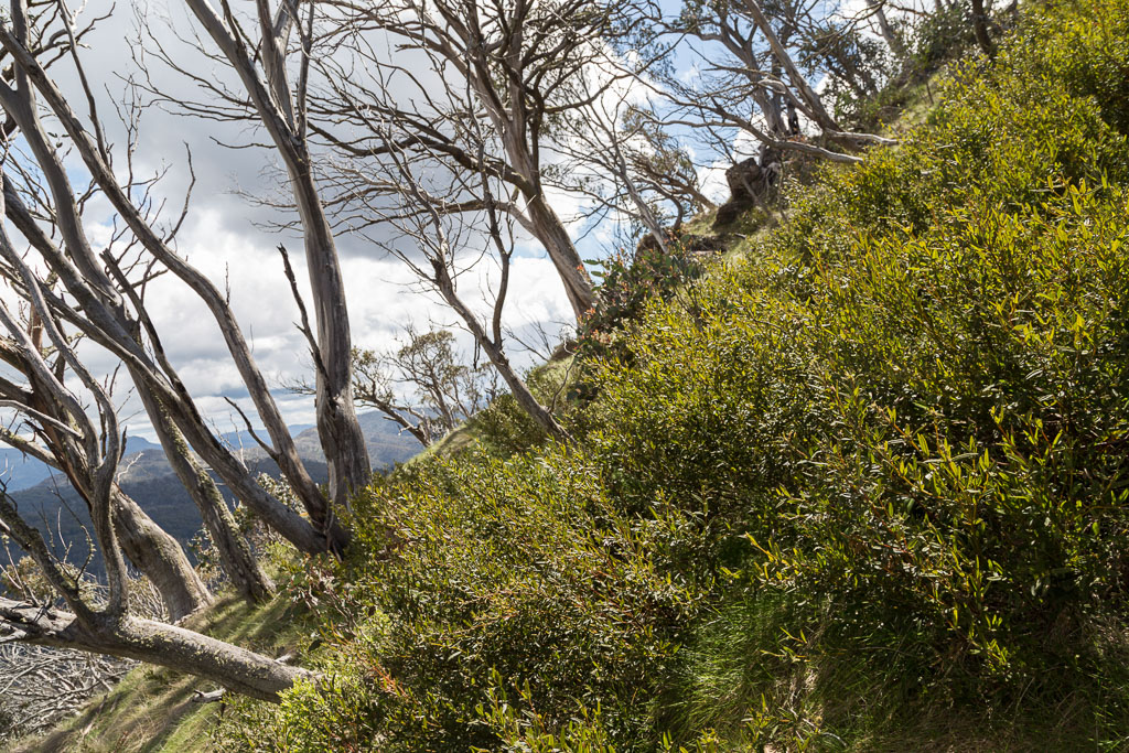 steep-hillside-mount-speculation