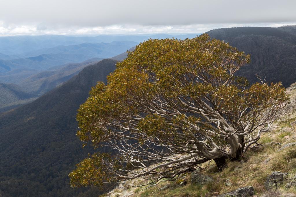 tree-on-crosscut-saw