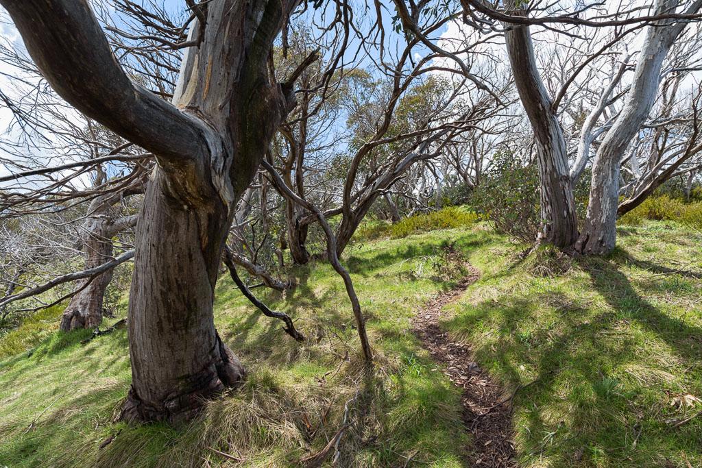 trees-crosscut-saw