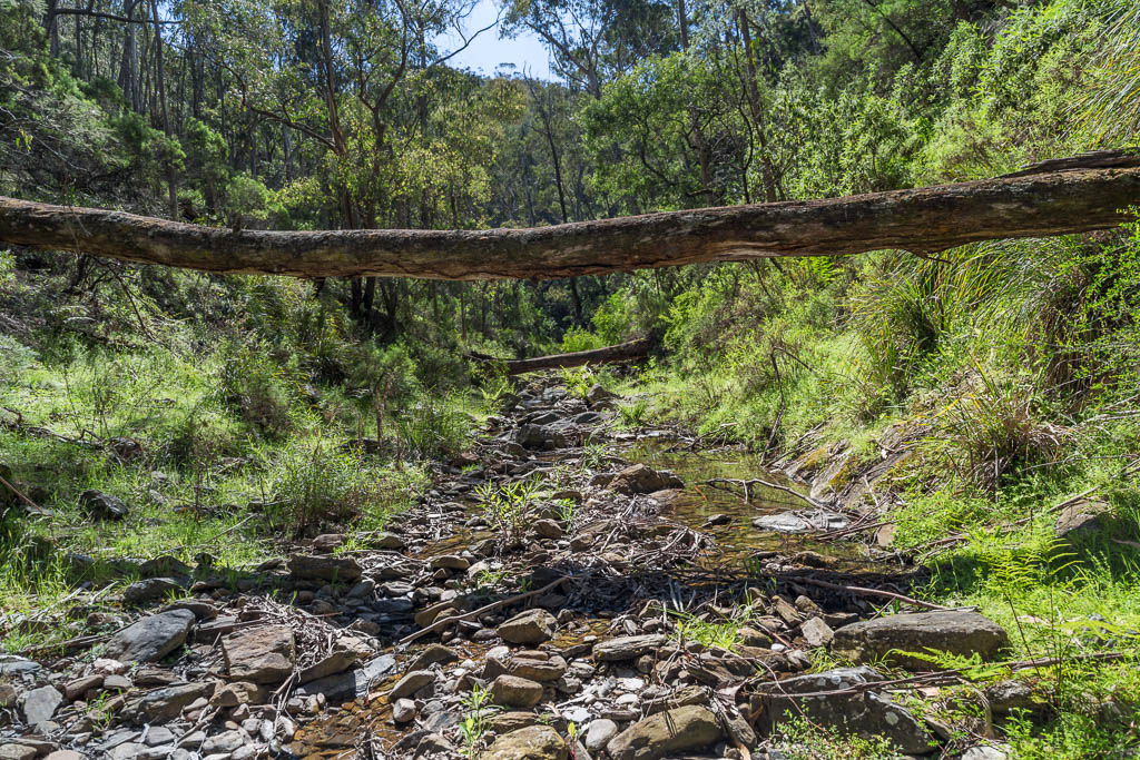 fallen-trees-clearwater-creek