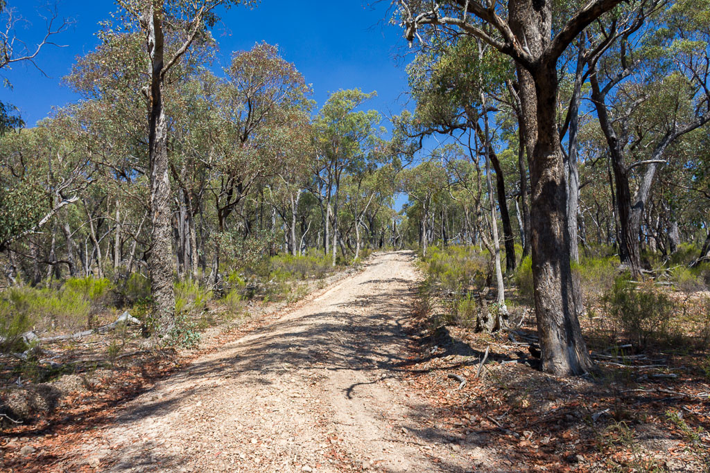 rodney-track-descent
