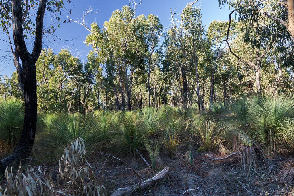 grass-trees-brisbane-ranges
