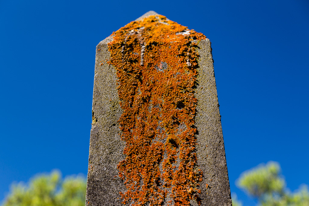 moss-on-grave-stone