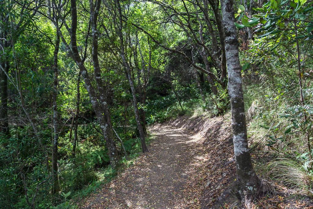 three-creek-circuit-track-great-ocean-walk