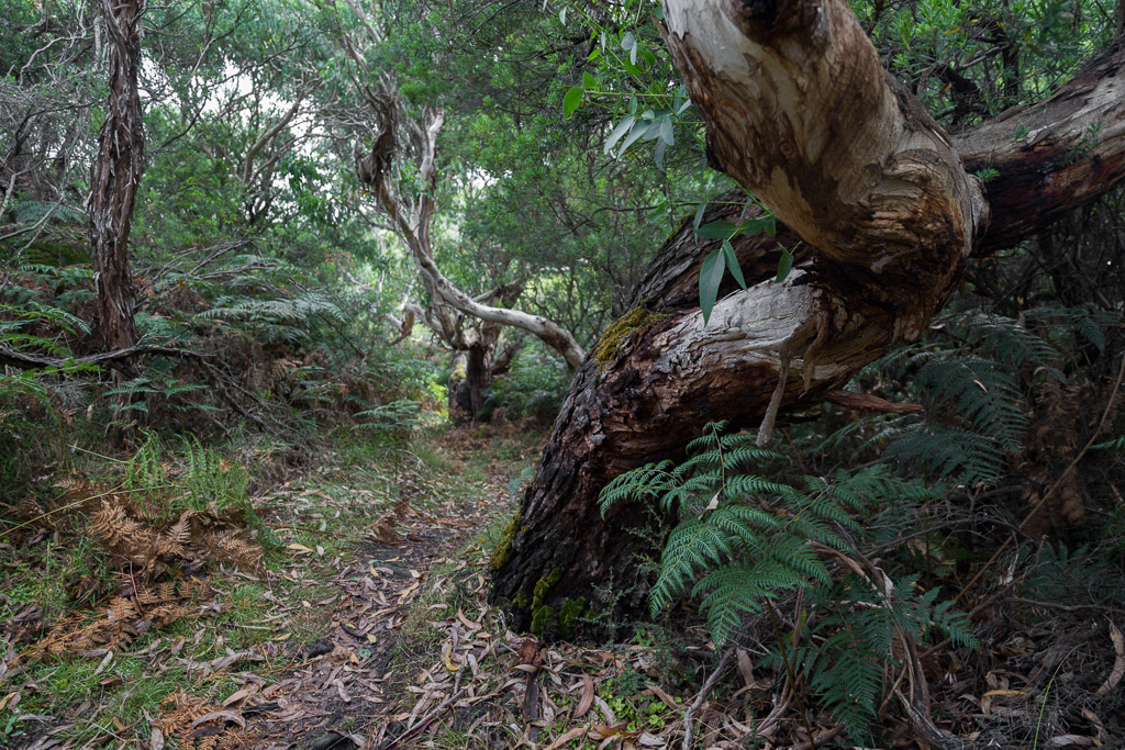 ferns-great-ocean-walk-track