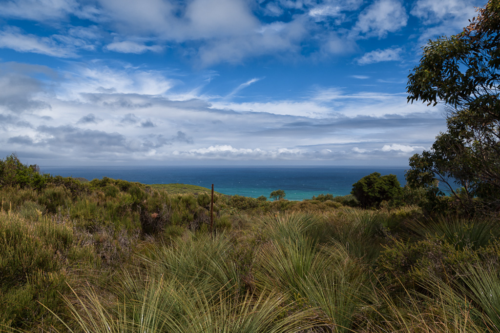 grass-trees-ocean-great-ocean-walk