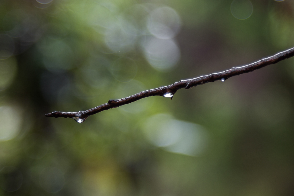 water-drops-on-tree-branch